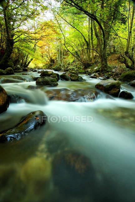 España, Asturias, Hermo en el Parque Natural otoñal de Fuentes del Narcea - foto de stock