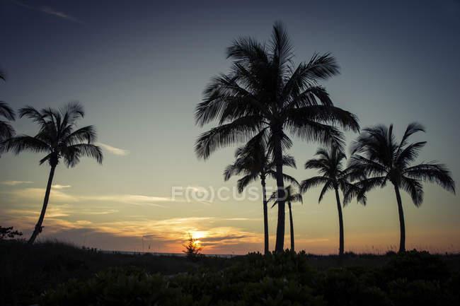 Stati Uniti, Florida, Captiva Island, palme al tramonto — Foto stock