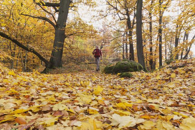 Германии, в земле Рейнланд-Пфальц, туристы, прогуливаясь по осеннего леса Пфальц — стоковое фото