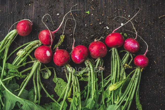 Recién recogido rábanos rojos - foto de stock