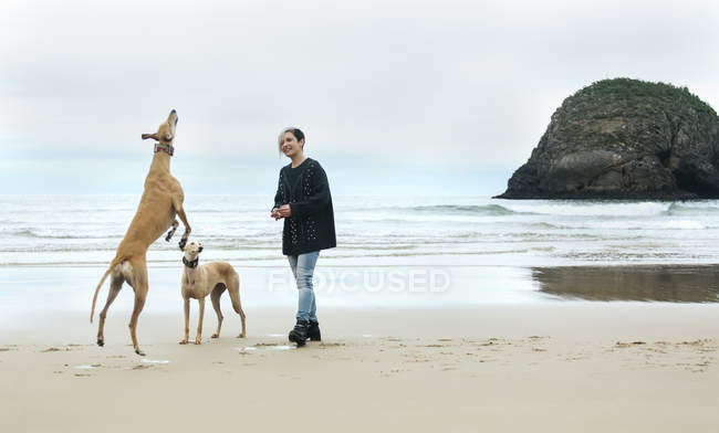 Young woman playing with her greyhounds on the beach — Stock Photo