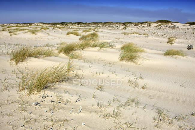 Португалія, природний заповідник Сан-Хасинто дюни — стокове фото