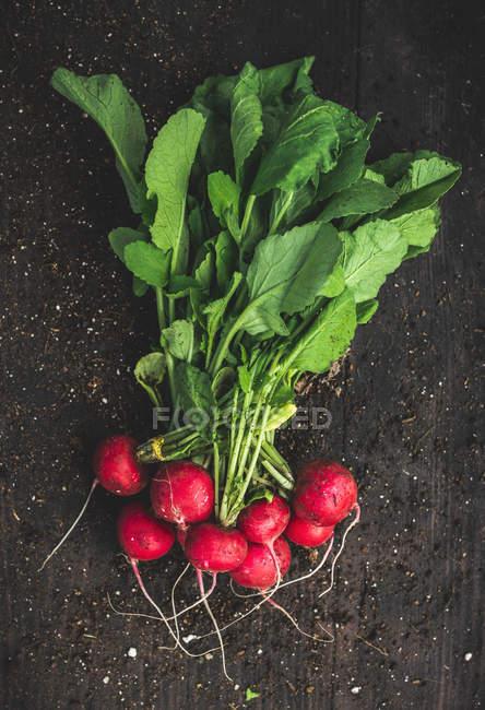 Recién elegido suelo y rábanos rojos - foto de stock