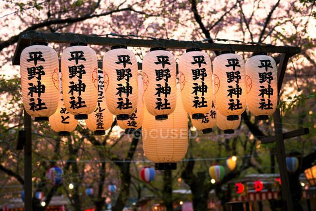Японія, Kyoto, ряд освітлені японських ліхтарів в парку на квітучій сезон — стокове фото