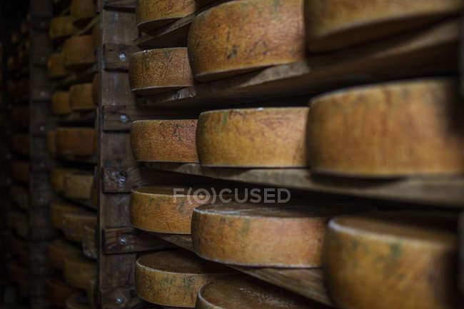 Panes de queso madurando en las estanterías de la fábrica de queso - foto de stock