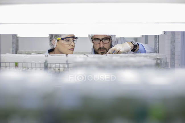 Scientists working in lab wearing protective clothing looking at samples — Stock Photo