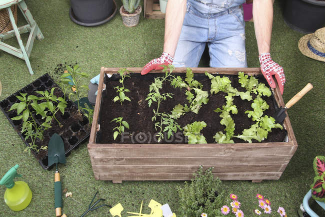 Container with tomatoe plants, pepper plants and lettuce in the urban garden — Stock Photo