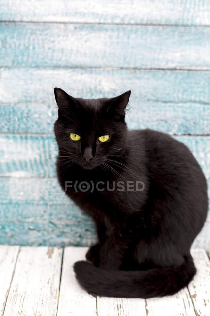 Black cat sitting in front of wooden wall — Stock Photo