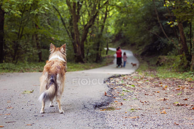 Abandoned dog standing on footpath watching people — Stock Photo