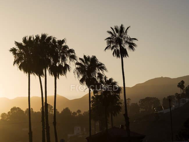 Силуети долоні на Вечір twilight в Лос-Анджелесі, США — стокове фото
