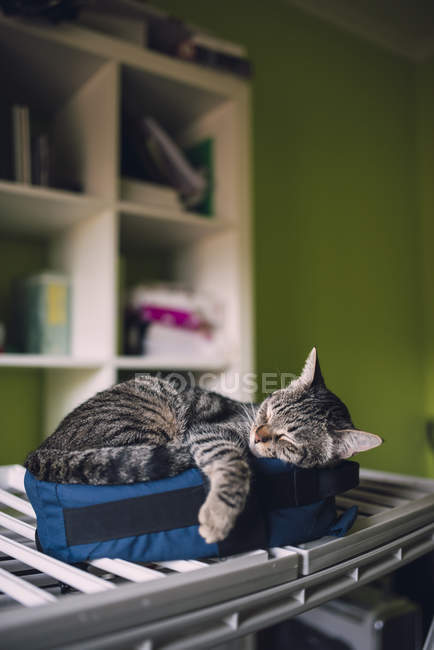 Tabby cat sleeping on little bag at home — Stock Photo
