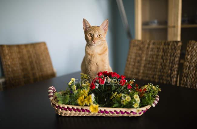 Ingwer Katze sitzt hinter Korb mit Plastikblumen auf Tisch — Stockfoto