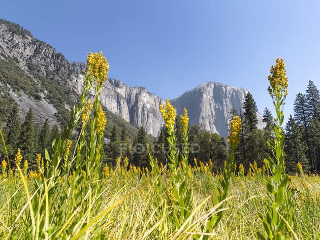 США, Калифорния, Национальный парк Йосемити, зелёный луг в горах Сьерра-Невада — стоковое фото