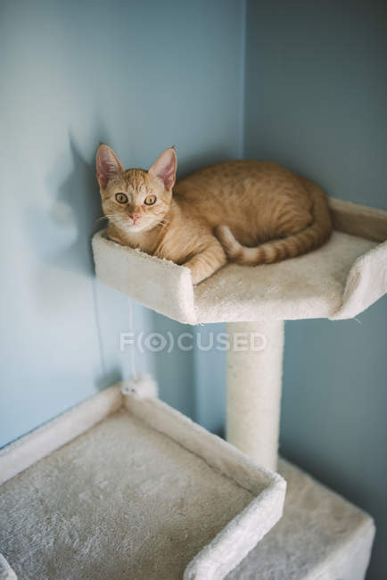 Ginger kitten lying on scratching post at home — Stock Photo