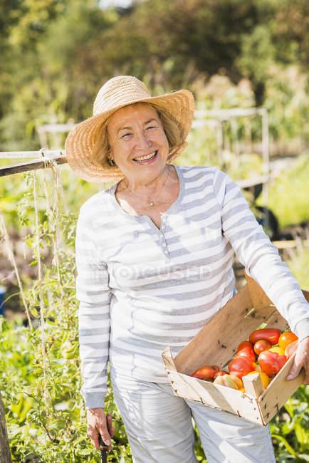 Mujer mayor sonriente en el jardín sosteniendo cajón con variedad de tomates - foto de stock