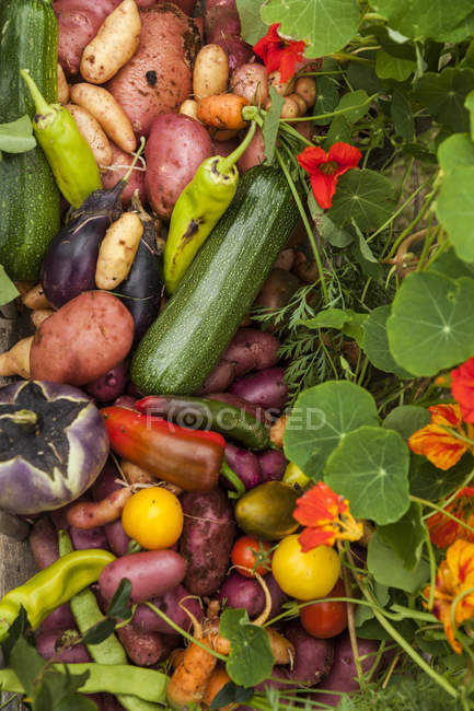 Different fresh picked organic vegetables on grass in garden — Stock Photo