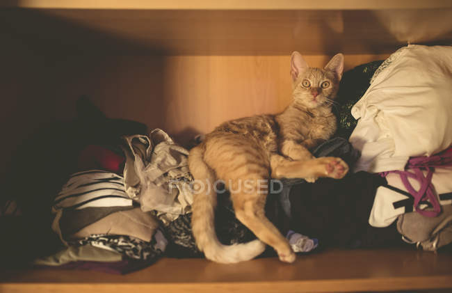 Tabby ginger cat lying on clothing inside closet at home — Stock Photo