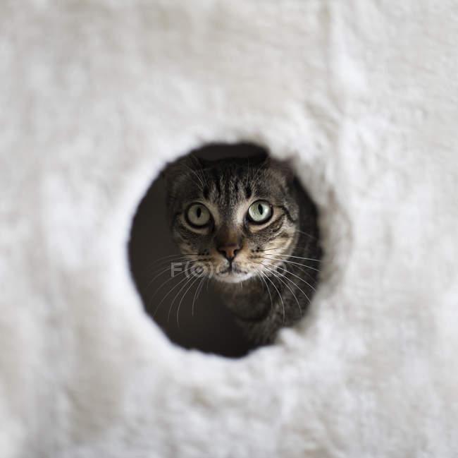 Gatto guardando attraverso foro di scratching post — Foto stock