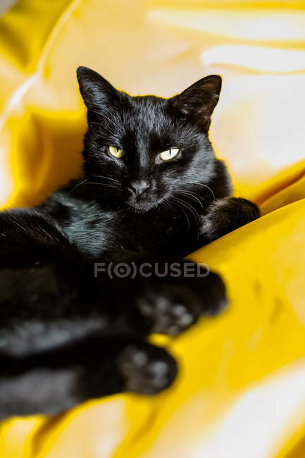 Black cat relaxing on yellow blanket — Stock Photo