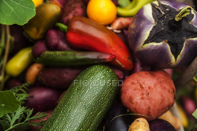 Different fresh  organic vegetables in heap — Stock Photo