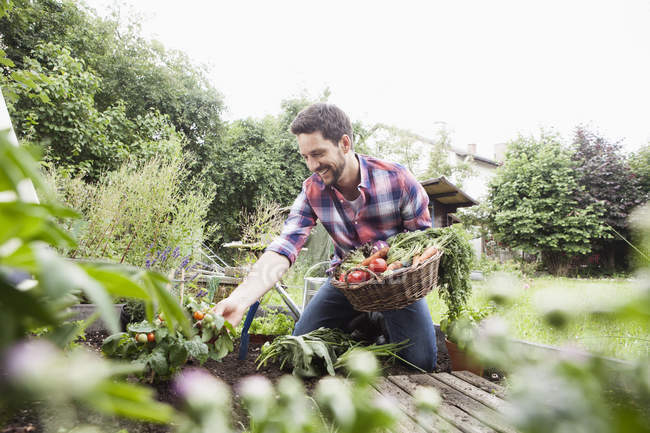 Caucasian man gardening in vegetable patch — Stock Photo
