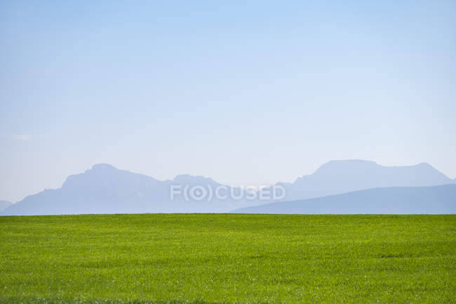 Germany, Upper Bavaria, Green meadow with Alps in background — Stock Photo
