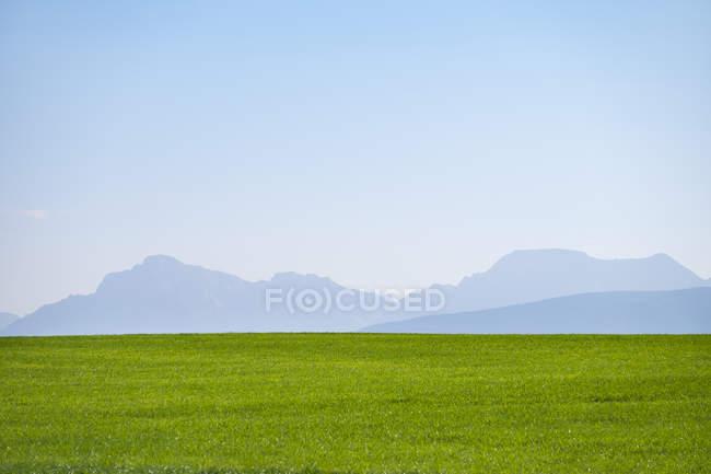 Alemanha, Alta Baviera, Prado Verde com Alpes em segundo plano — Fotografia de Stock