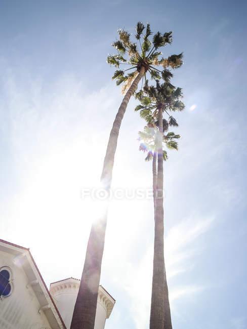 Нижній подання пальмами біля будівлі в підсвічування, Санта-Барбара, США — стокове фото