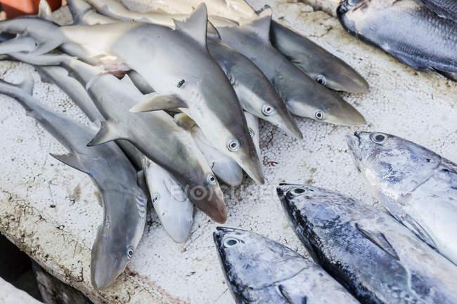 Rohe Babyhaie auf dem Fischmarkt — Stockfoto