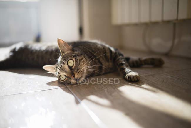 Tabby cat lying on kitchen floor — Stock Photo