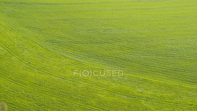 View of meadow with tractor tracks, Germany — Stock Photo