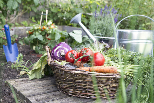 Basket full of organic vegetables — Stock Photo