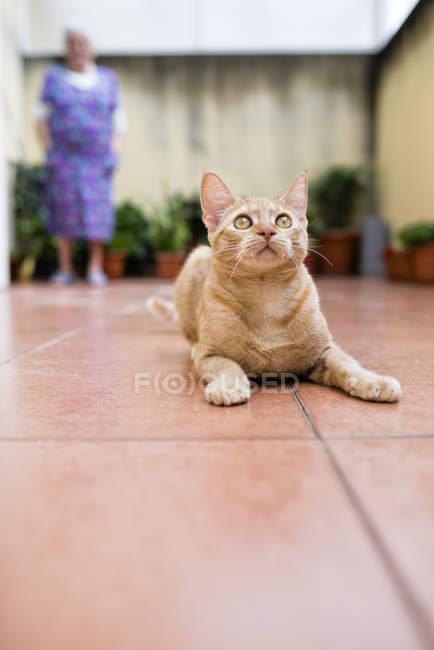 Ginger süße Kätzchen spielen auf Terrasse — Stockfoto