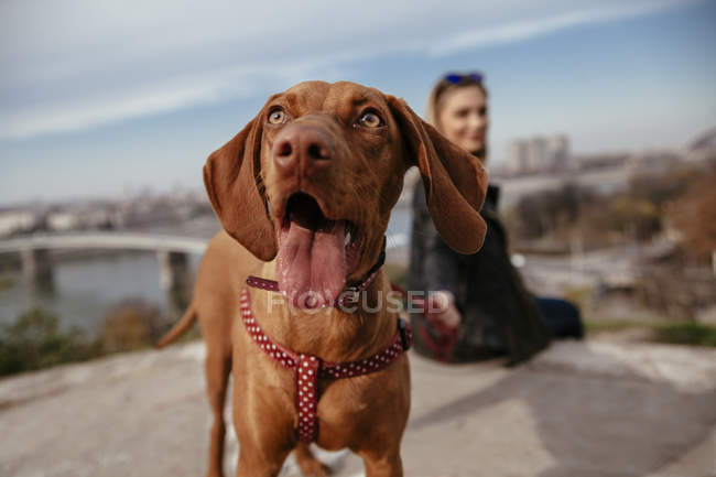 Dog looking up while owner sitting on background — Stock Photo