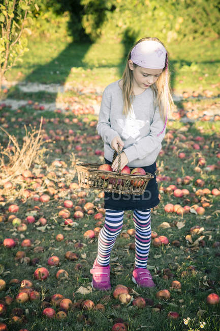 Portrait of girl collecting windfalls on a meadow — Stock Photo