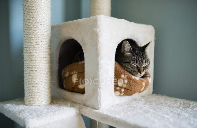 Tabby cat sleeping on blanket in cat house — Stock Photo