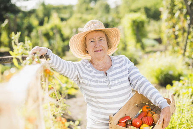 Smiling senior woman in garden holding crate with variety of tomatoes — Stock Photo