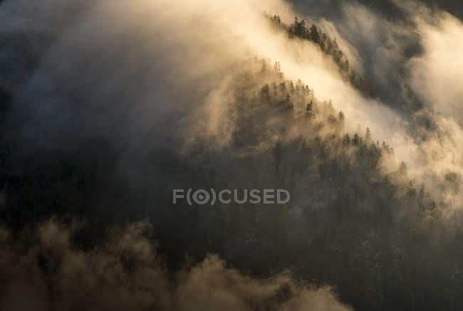 Austria, Tirol, Kufstein, árboles y niebla - foto de stock