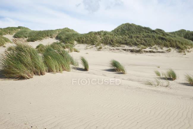 Netherlands, Holland, Zeeland, Domburg, dunes, nature reserve — Fotografia de Stock