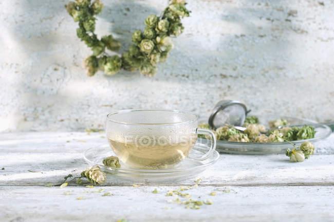 Té de lúpulo en taza de vidrio y flores de lúpulo - foto de stock