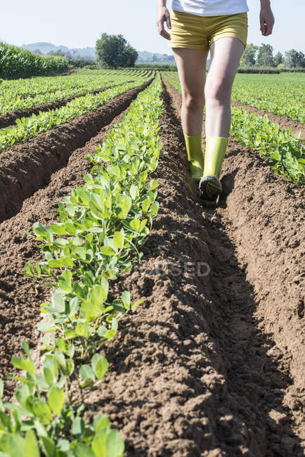 Cropped view of woman walking in field with young peanut plants — Stock Photo