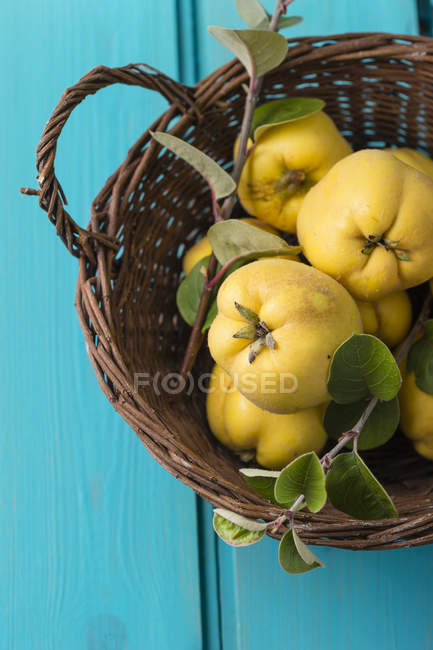 Basket of fresh quinces on blue wooden surface — Stock Photo