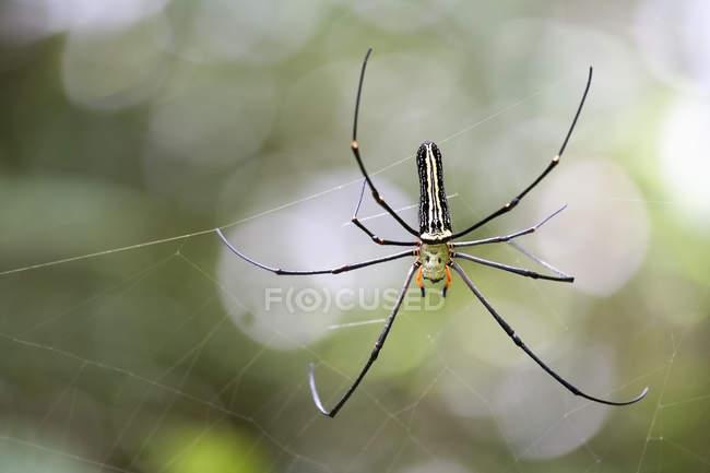 Aranha na exibição de closeup de teia de aranha — Fotografia de Stock