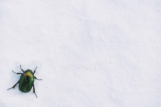 Shiny green beetle on a white wall — Stock Photo