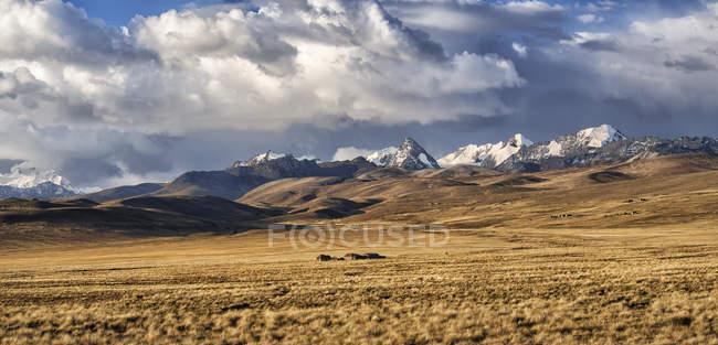Bolivien, La Paz, Altiplano, kleine Häusergruppe in der bolivianischen Hochebene mit Bergen der Cordillera Real im Hintergrund — Stockfoto