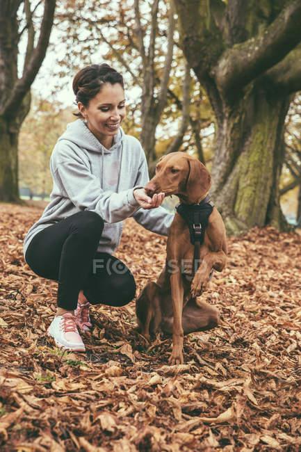 Жінка, даючи її собака Vizsla ласощі у парку восени — стокове фото