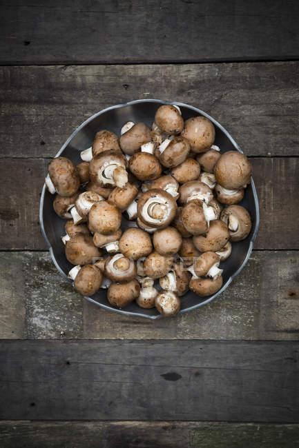 Кріміні гриби в мисці — стокове фото