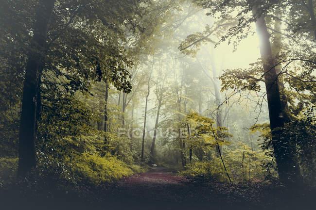 Bosque y camino contra el sol - foto de stock
