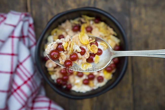 Йогурт с кукурузные хлопья и красная смородина на ложку и в миске — стоковое фото
