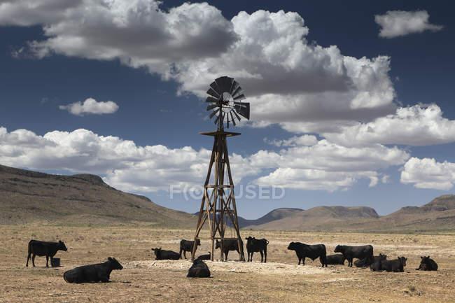 Bovini di Stati Uniti, Texas, di acqua del mulino a vento, vista su sfondo di paesaggio naturale delle colline — Foto stock